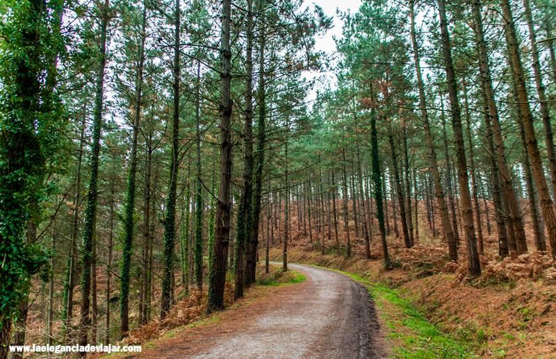 Empezamos a caminar hacia el bosque pintado