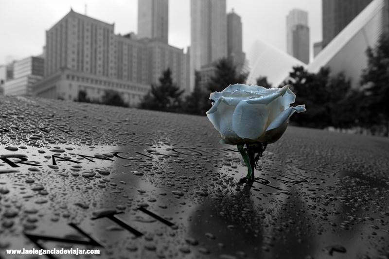 Rosa en Reflecting Absence