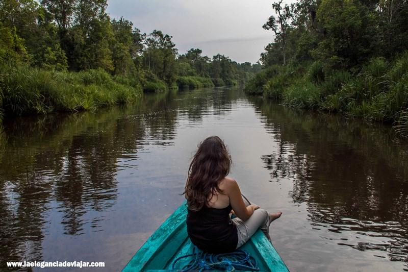Disfrutando de la Selva de Borneo