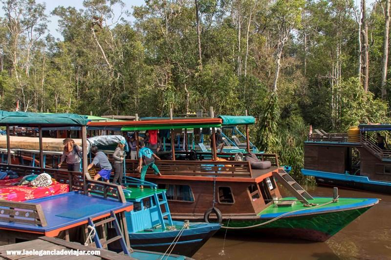 Klotoks en la selva de Borneo