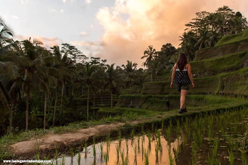 Arrozales Tegalalang en Bali