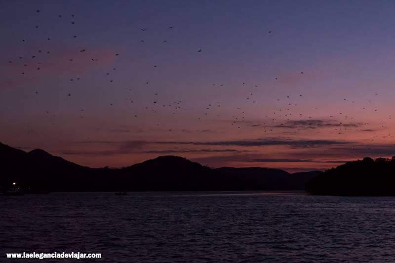 Murciélagos por los cielos de Komodo