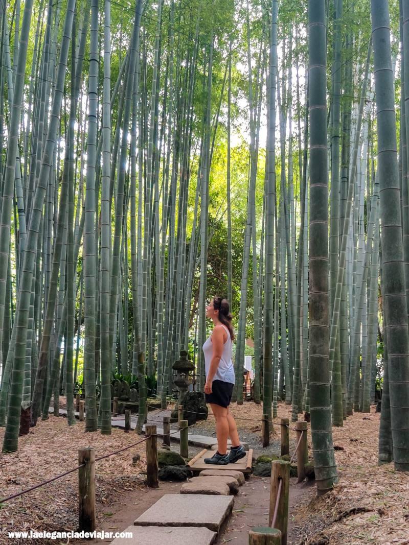 Bosque de bambú en Hokoku-ji