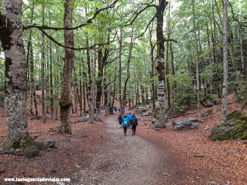 Bosque de hayas en el Valle de Ordesa